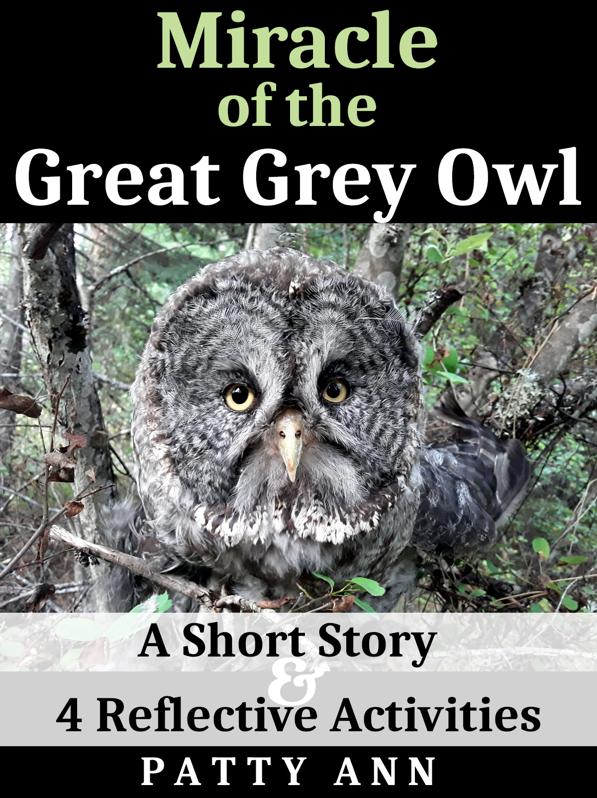 Great Grey Owl Miracle Story & 4 Activities – Patty Ann